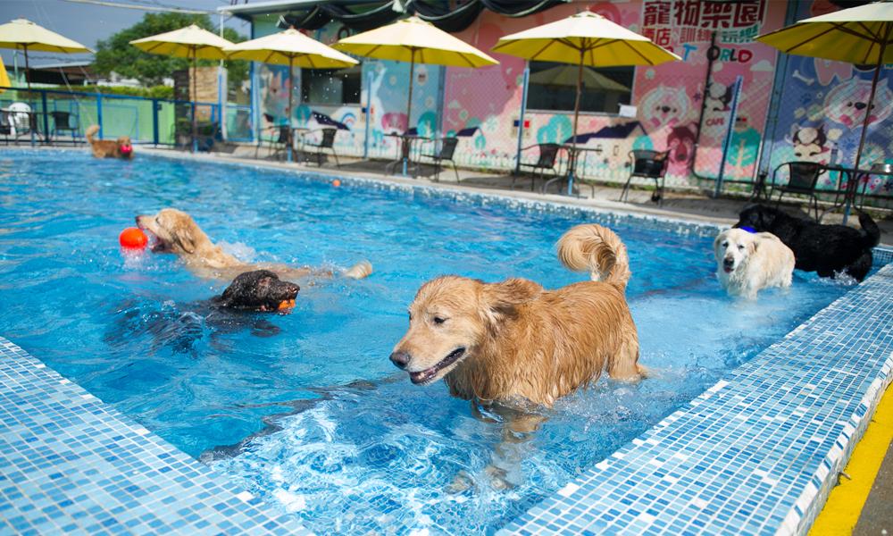 Dog Boarding Hong Kong
